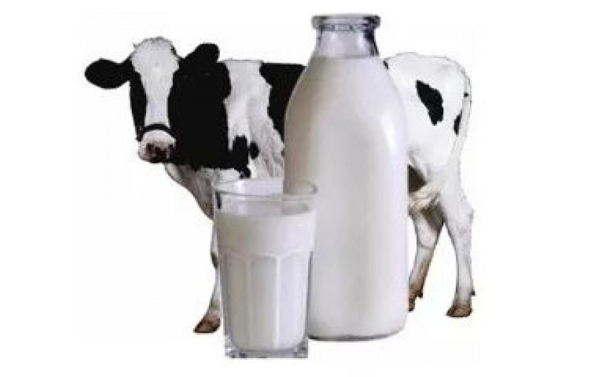 Анализ эффективности производства молока..