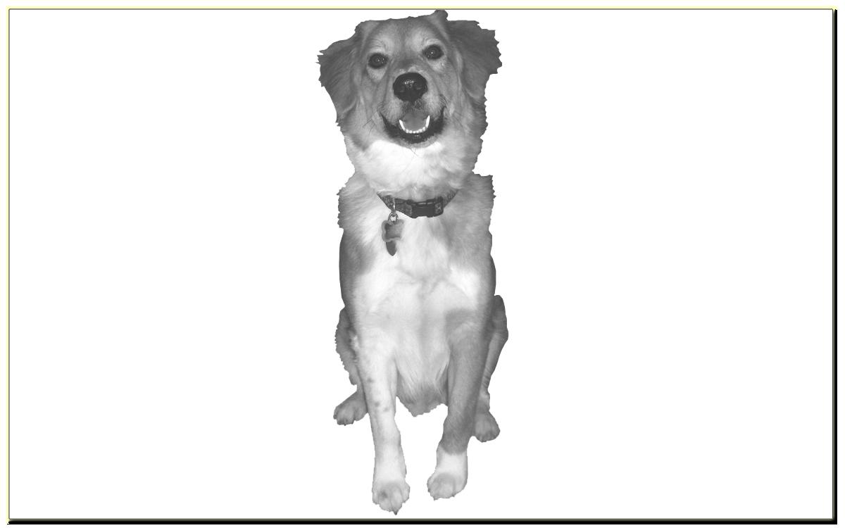 Караульная служба собак. Курсовая