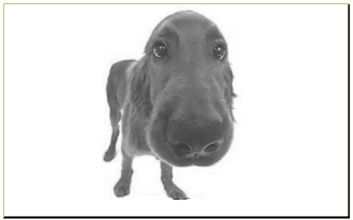 Раздражители, применяемые при дрессировке собак