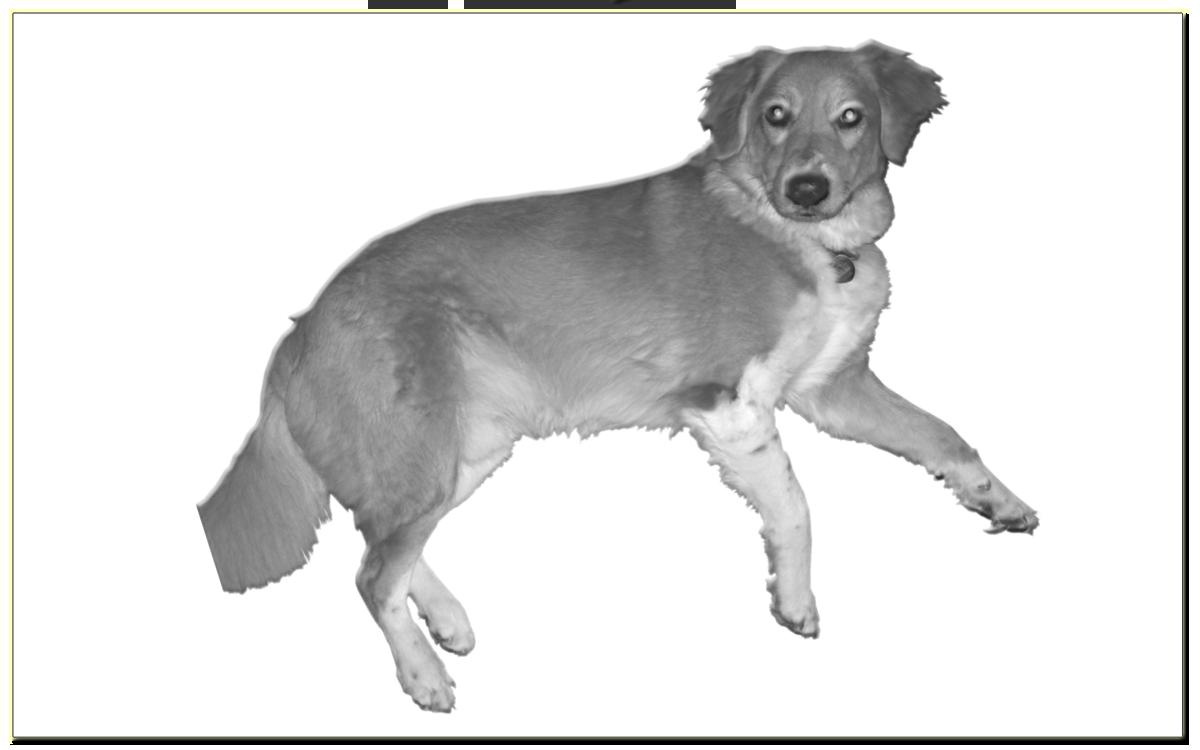 Различные способы содержания собак (декоративных, ..