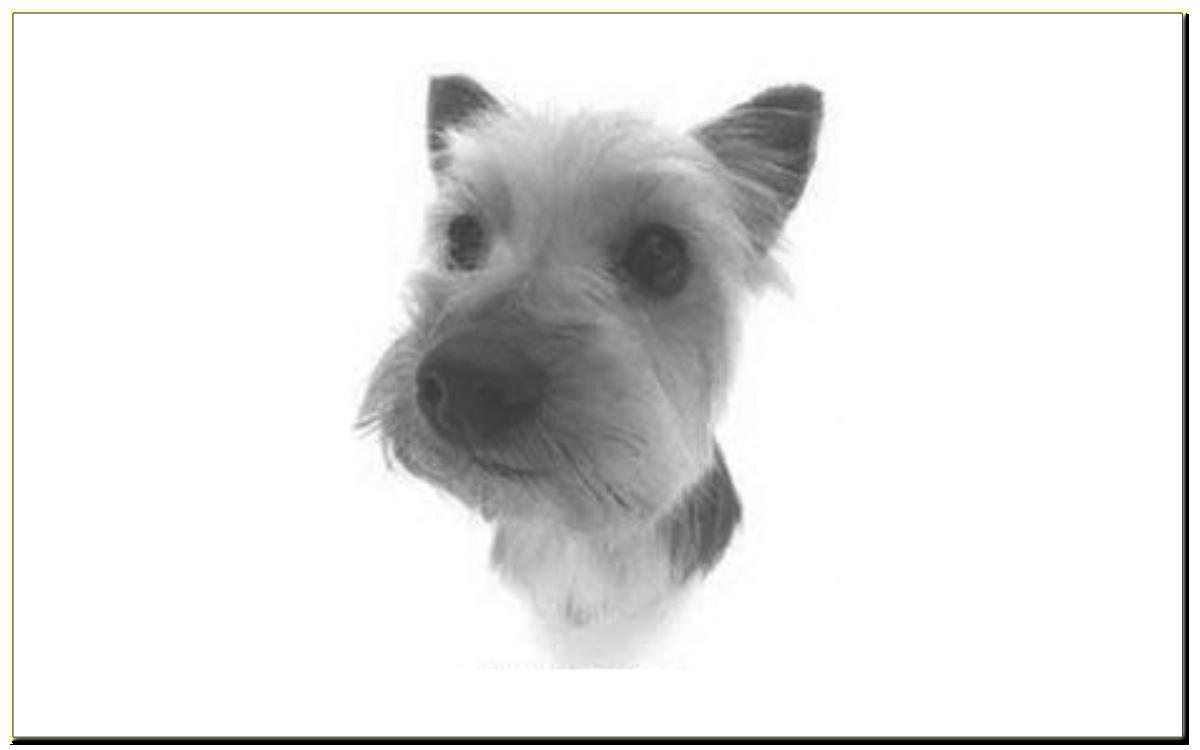 Принципы построения питомника служебных собак
