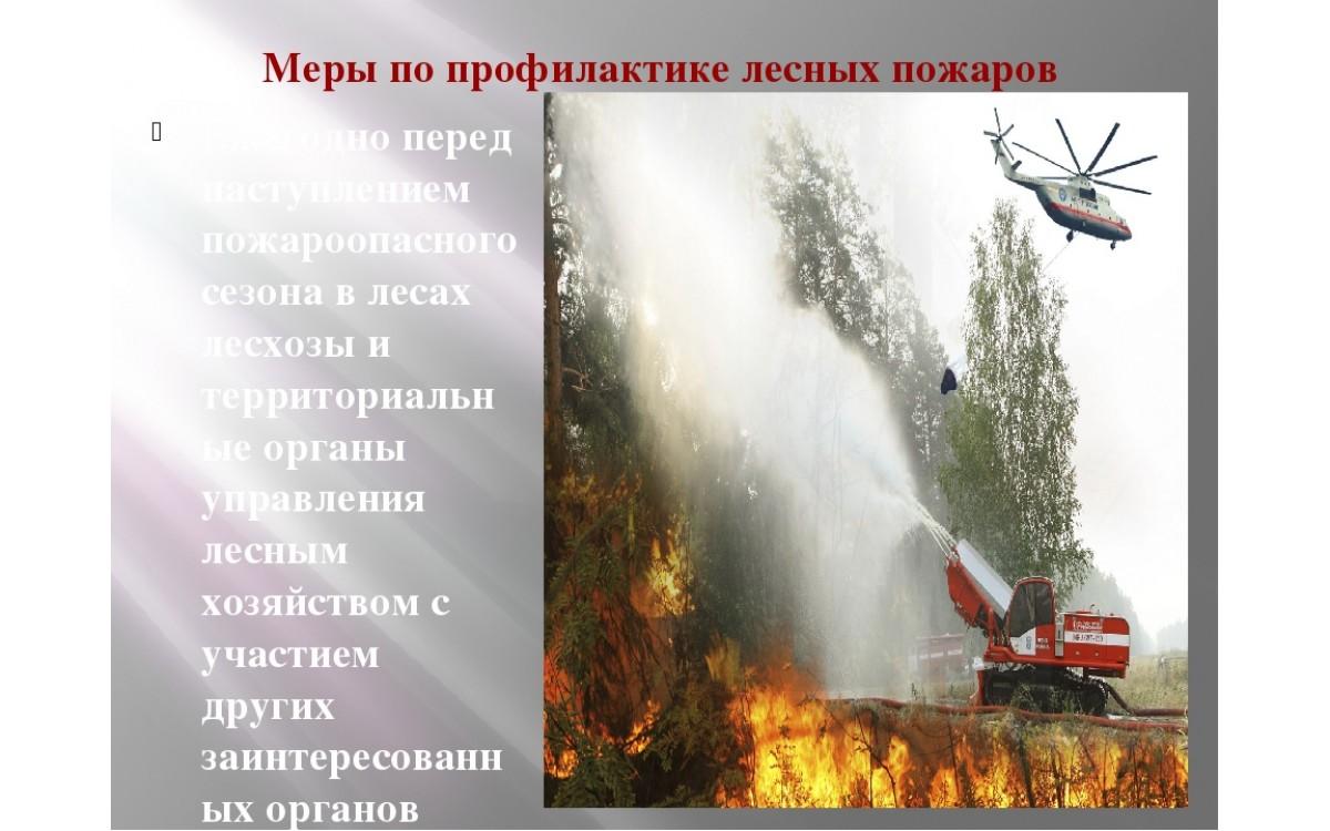 Реферат. Меры по предупреждению лесных пожаров